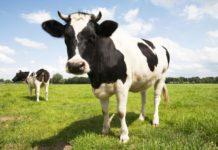 Ce inseamna cand visezi vaci