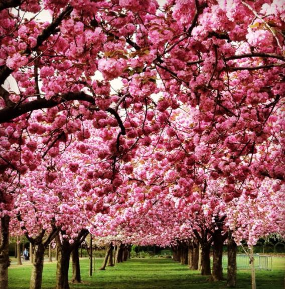 Grădina Botanică din Brooklyn, New York