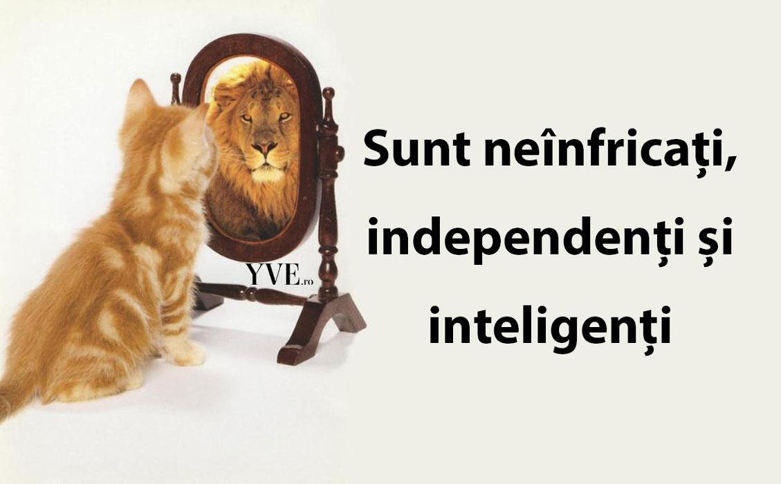 Sunt neînfricați, independenți și inteligenți
