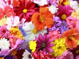 nume de flori