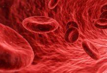 eritrocite
