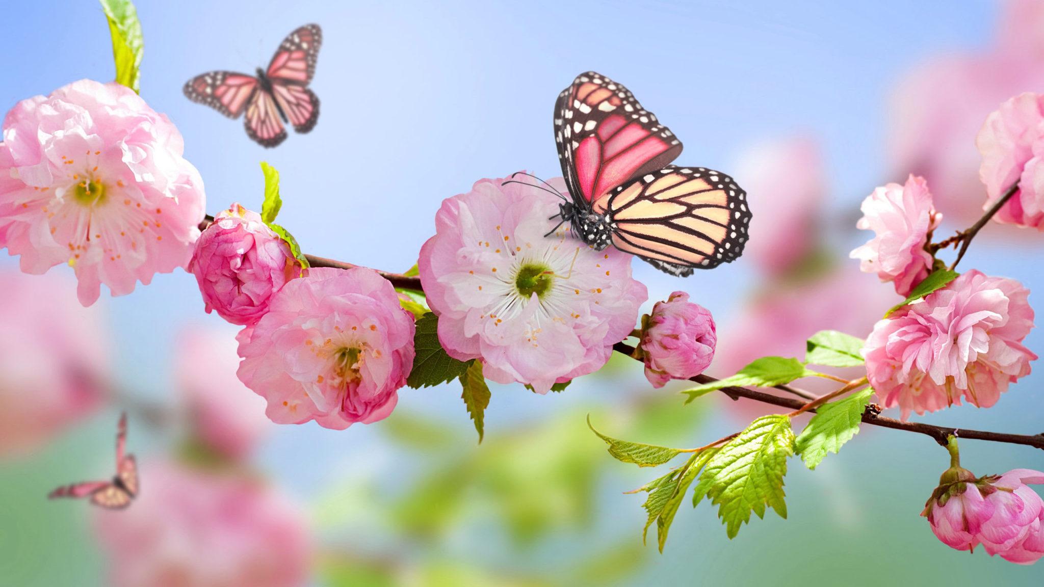 Imagini de primavara cu fluturi